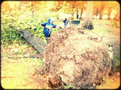 Storm Sandy's Aftermath